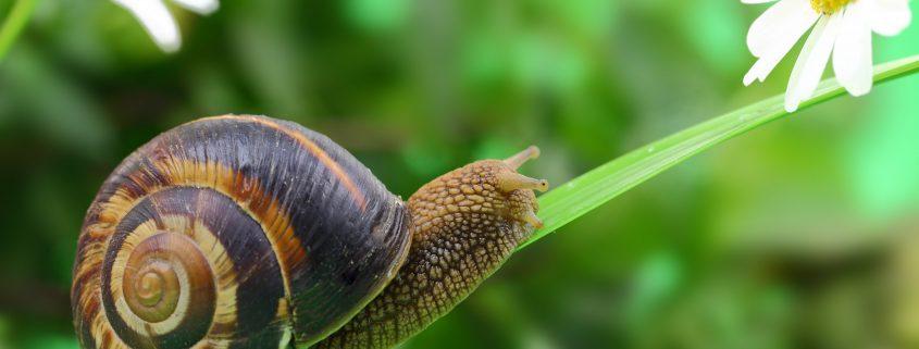 snail korean beauty post sheet mask