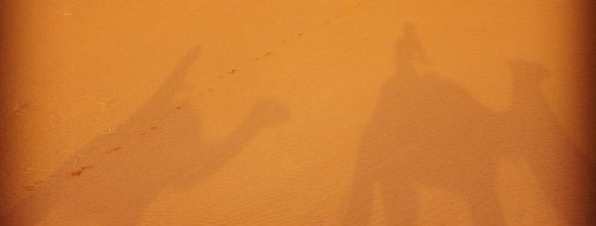 ride camels sahara desert erg chigaga morocco mhamid