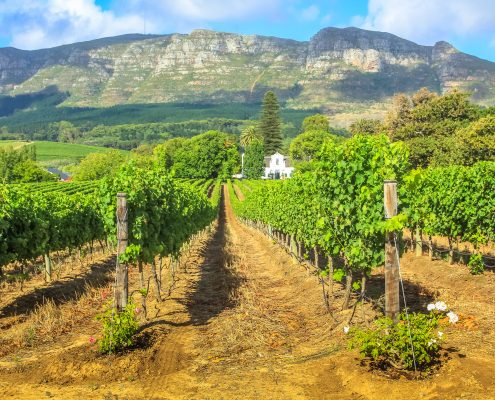 Stellanbosch South Africa wine region Wanderglow