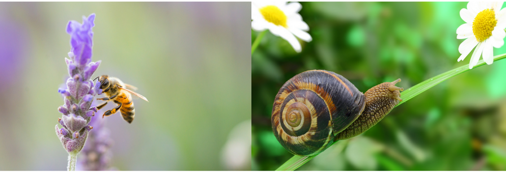 bee venom and snail mucus make great beauty ingredients although they are bizarre
