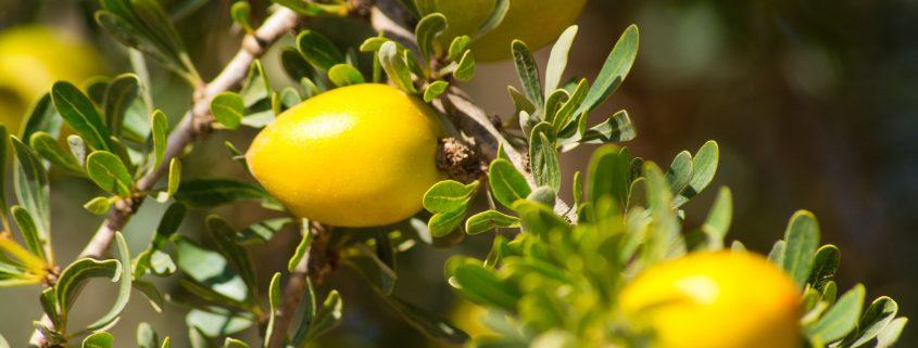 Argan oil has skin, beauty and health benefits.